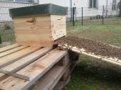Die Bienen wandern tendenziell nach oben...