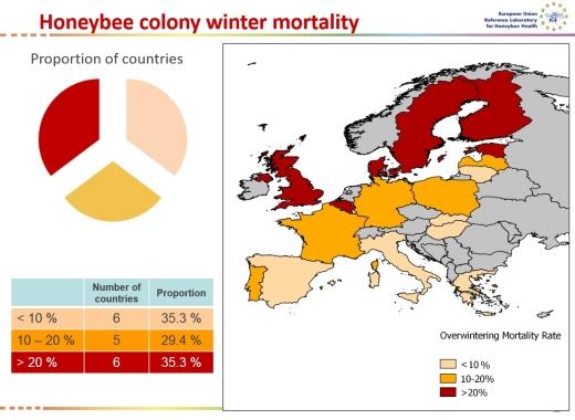 Honebeyy-colony-winter-mortality