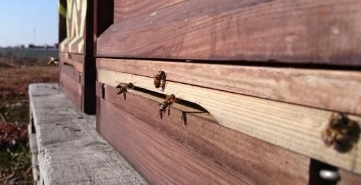 Bienenflug-Dach-Februar-2015